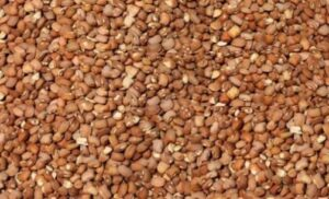 EU extends its ban on Nigerian bean imports over pesticide residue concerns until June 2022