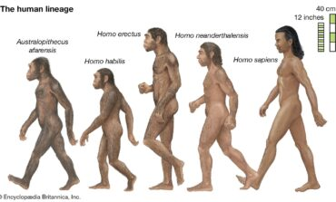 With Biden making saving the environment a major policy objective, it is time for mankind to show a little humility and acknowledge that we are just the ape that got lucky