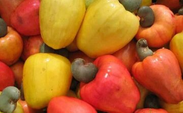 Nigeria and US sign cashew MoU designed to boost both production and local processing