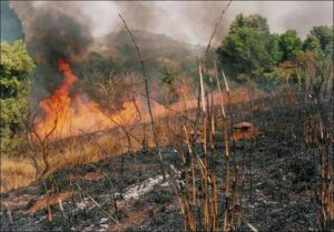 Fulani herdsmen problem spreads to Akwa Ibom as governor's aide has his plantation burnt down