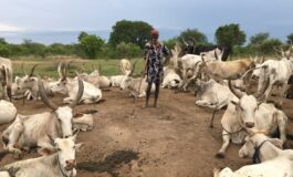 Nasarawa State to open first grazing reserve under NLTP plan after receiving Dutch funding