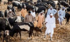 Buhari imposes no flight zone over Zamfara as herdsman says government armed them