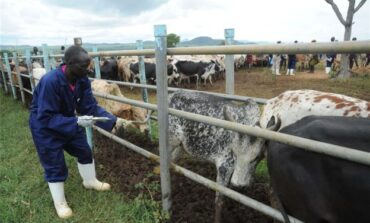 Six states refuse to donate land towards the federal government's National Livestock Transformation Programme