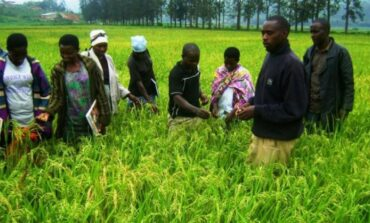 Nigeria initiates plans to train an extra 30,000 agricultural extension workers as part of economic diversification plan