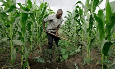 As a matter of urgency we need to radically pursue this Nigerian post-coronavirus agricultural expansion plan: 2021 to 2025