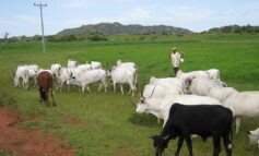 Senator Ndume faults Southern Governors Forum for demanding an end to open grazing