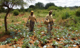 All Farmers Association of Nigeria warns of food shortages as a result of insecurity