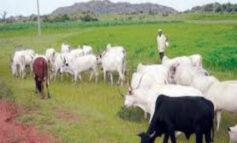 Agriculture ministry reveals that Nigeria has a total of 415 grazing reserves at the moment