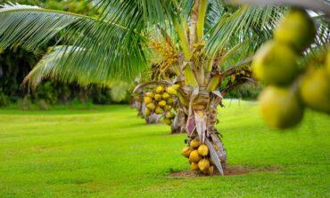 Do these global coconut production figures not embarrass the 200m Nigerians out there?