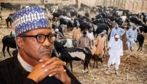 Coalition of over 400 northern groups vow to confront Fulani cattle herdsmen from now on