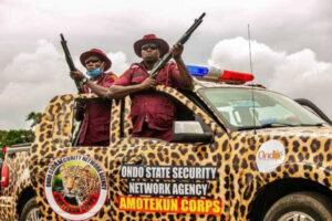 Ondo State Amotekun Corps arrests three herdsmen and confiscates 40 cows as anti-grazing kicks in